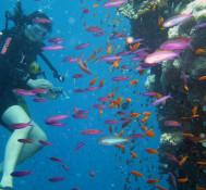 Plongée sous-marine à Tabarka