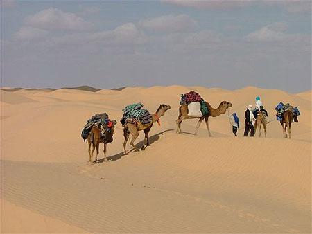 Tunisie désert - Tunisie dromadaires